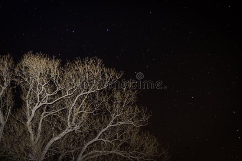 Baum gegen eine sternenklare Nacht lizenzfreie stockbilder