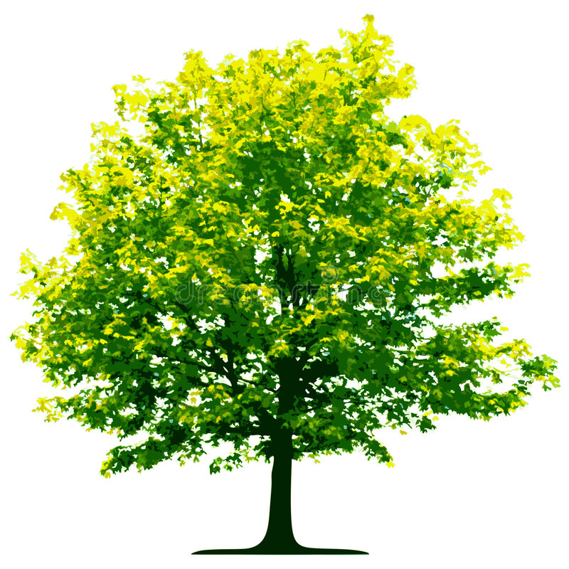 Baum getrennt vektor abbildung