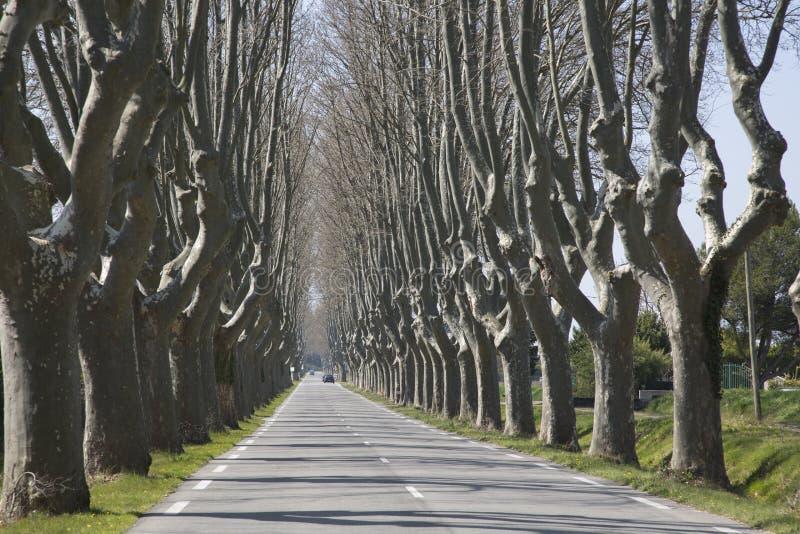 Baum gezeichnete Straße nahe Cavaillon stockfotos