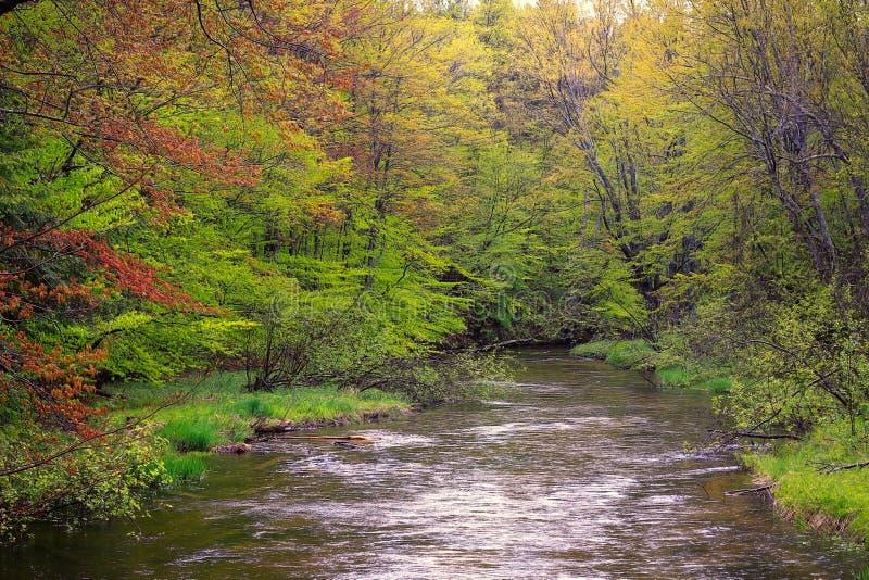 Baum gezeichneter Fluss im Frühjahr stockfotografie