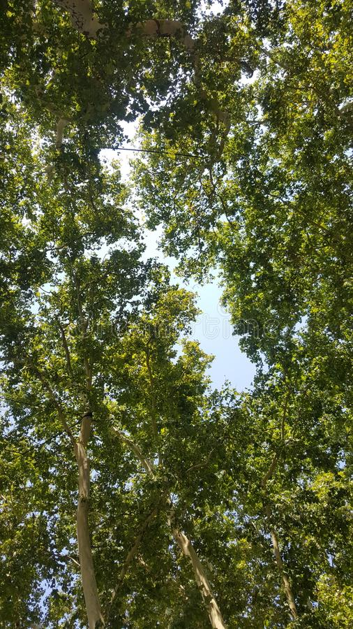 Baum baum Grün lizenzfreie stockfotografie