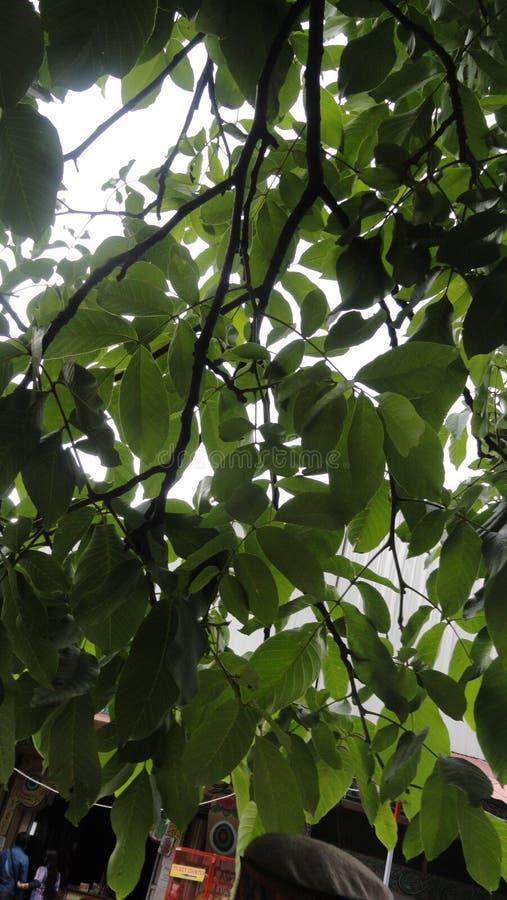 Baum-grünes Schatten-Naturfotografie stockbild