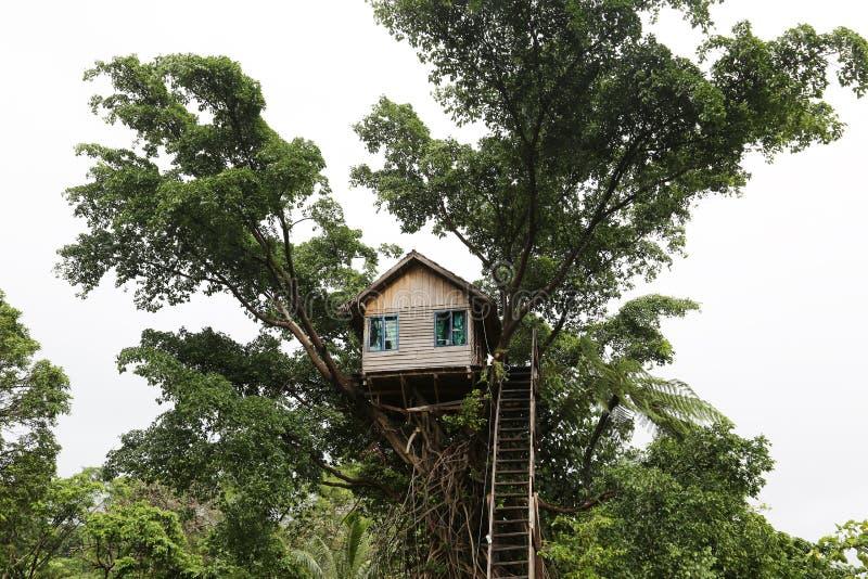 Baum-Haus im Dschungel in Vanuatu stockfotos