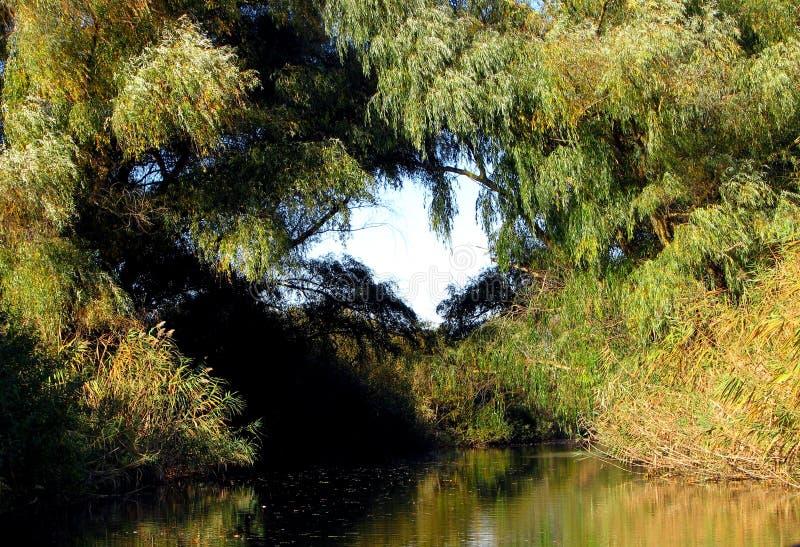 Baum-Herz stockfotos