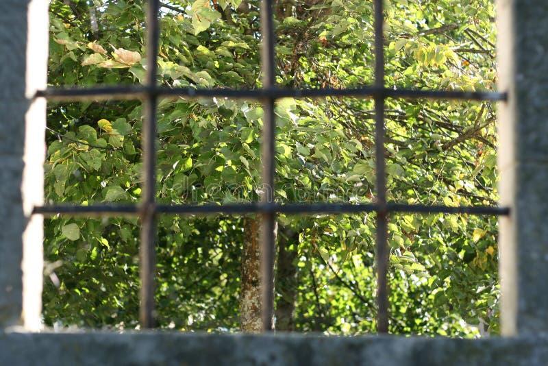 Baum hinter Gittern lizenzfreies stockbild