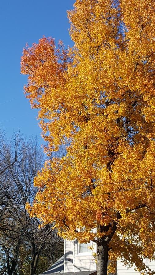Baum hinunter die Straße lizenzfreies stockbild