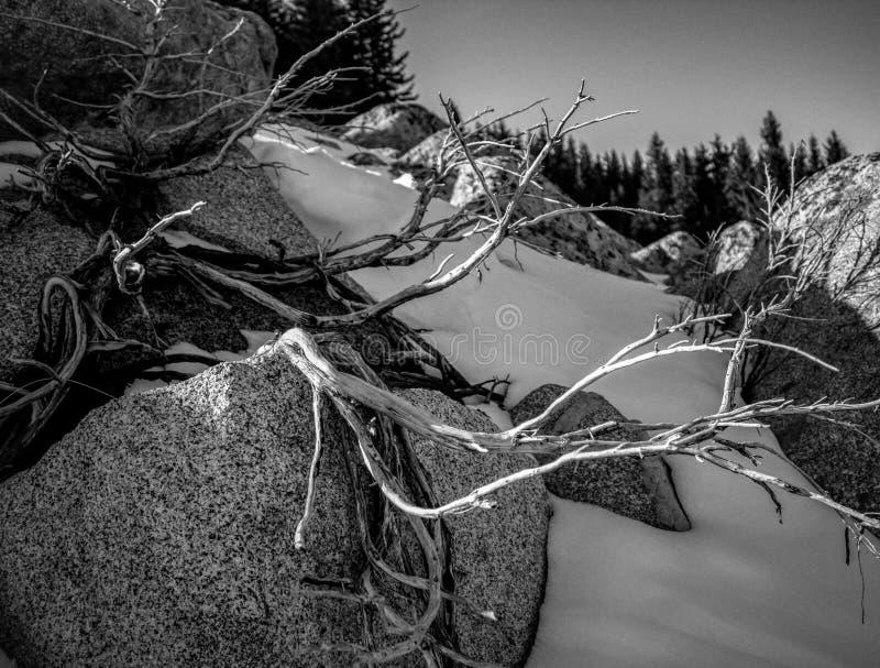 Baum im bulgarischen Berg stockfotografie