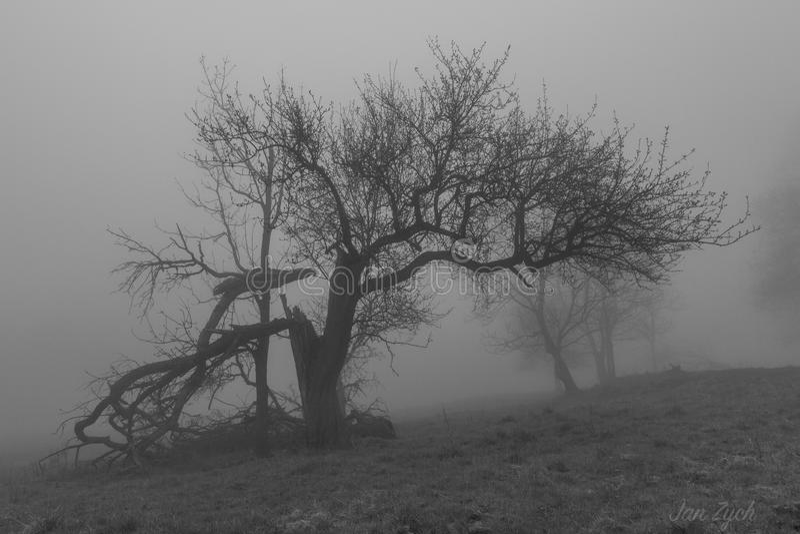 Baum im Dunst stockfoto