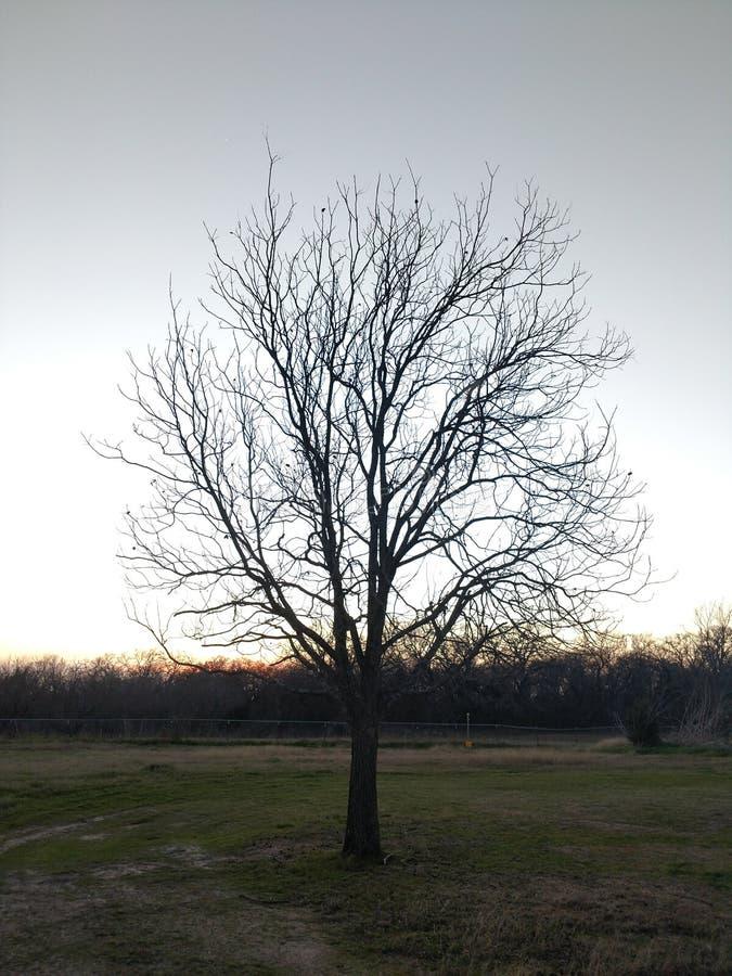 Baum im Fall lizenzfreie stockfotos