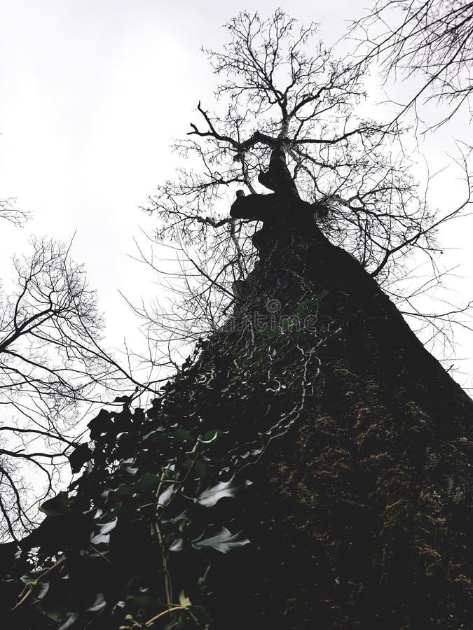 Baum im Grau stockfotos