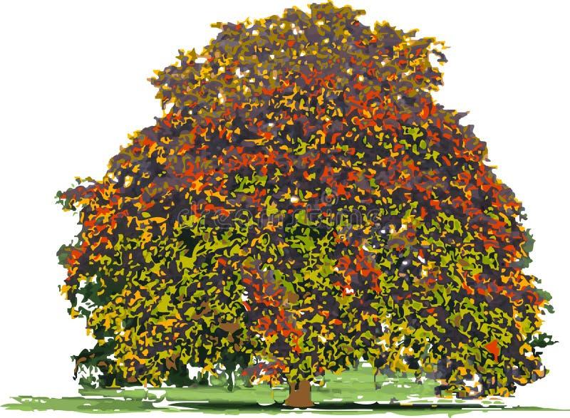 Baum im Herbst lizenzfreie abbildung