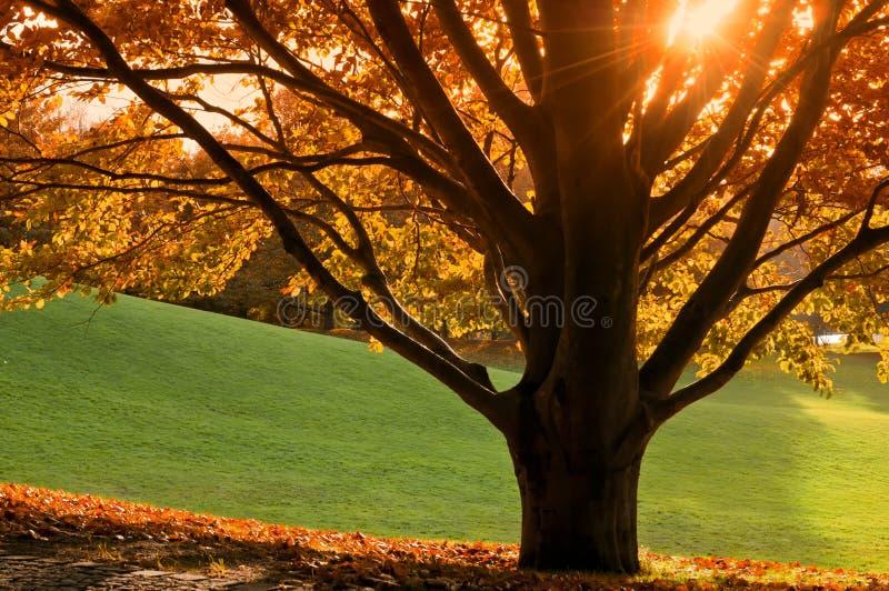 Baum im Herbst stockfoto