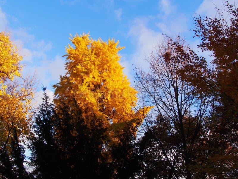 Baum im Herbst lizenzfreies stockfoto