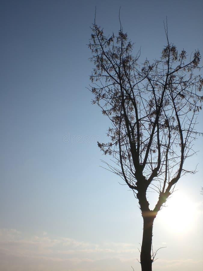 Baum im Herbst im Himmel lizenzfreie stockbilder