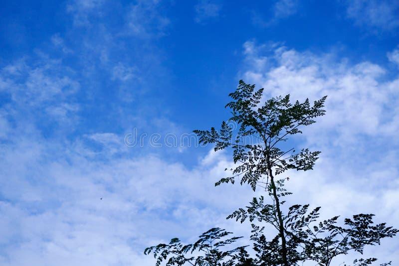 Baum im Himmel lizenzfreie stockbilder