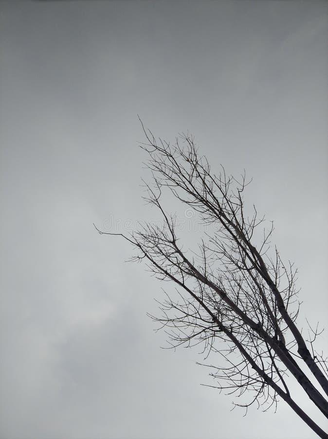 Baum im Himmel stockbild