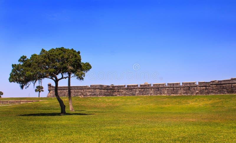 Baum im historischen Schloss stockfotos