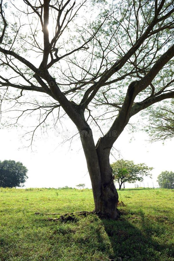 Baum im ländlichen Gebiet stockbild