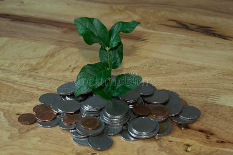Baum im Münzenhügel stockfoto