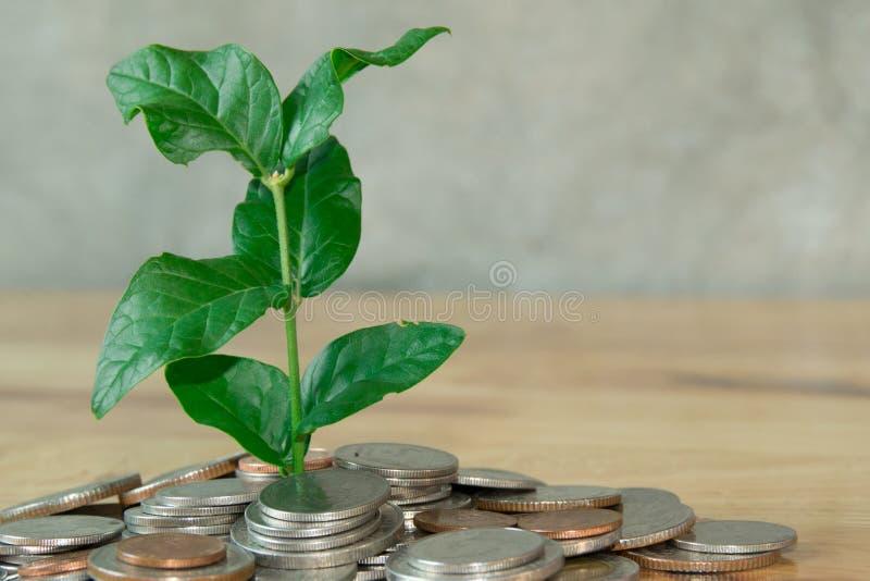 Baum im Münzenhügel stockbilder