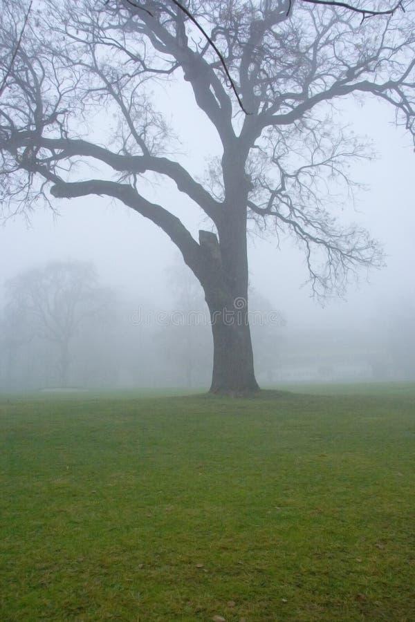 Baum im myst lizenzfreie stockfotos