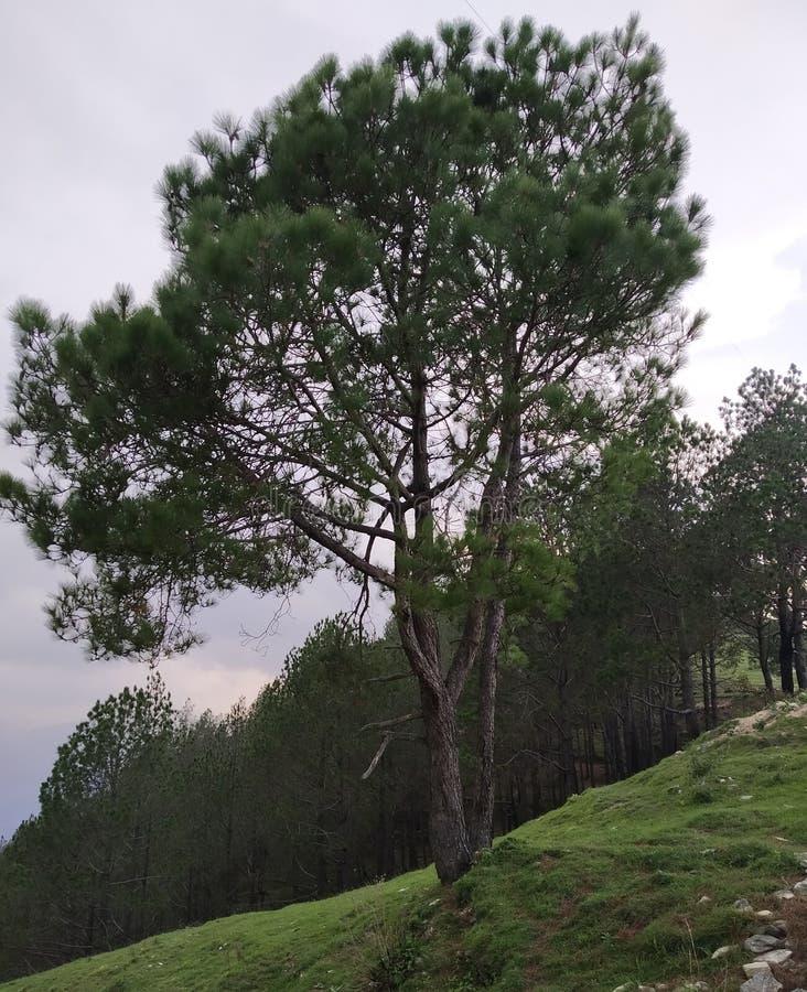 Baum im natürlichen Hügelbereich des Dschungels lizenzfreie stockfotografie