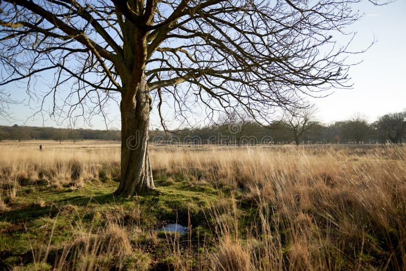 Baum im Park stockfotografie