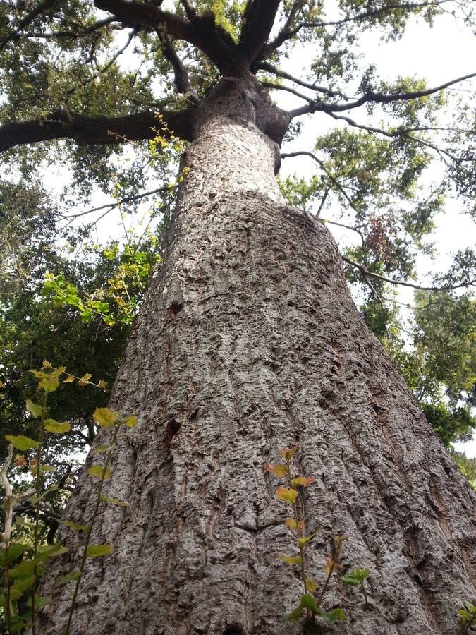 Baum im Park! stockbilder