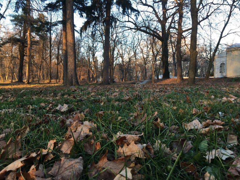Baum im Park rechtzeitig Abfallzeit lizenzfreies stockbild