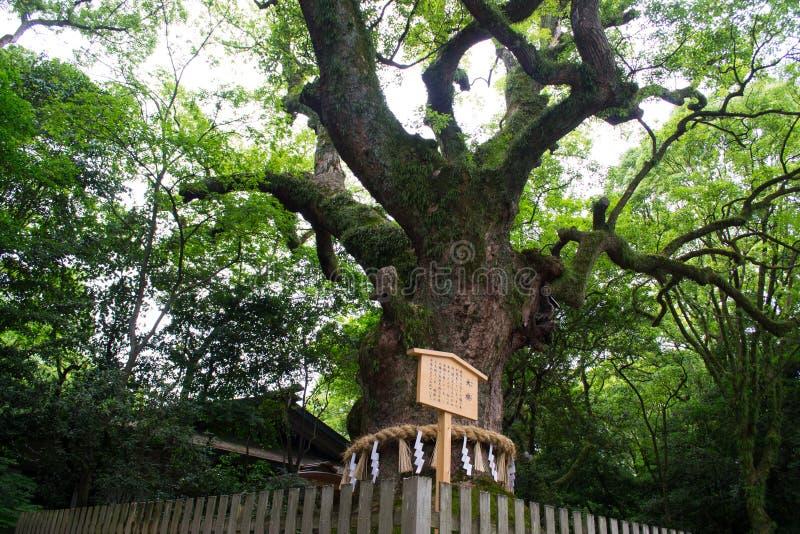 Baum im Schrein lizenzfreies stockbild