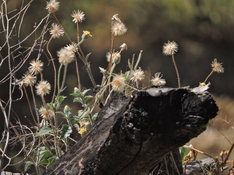 Baum im Sepia stockfotografie