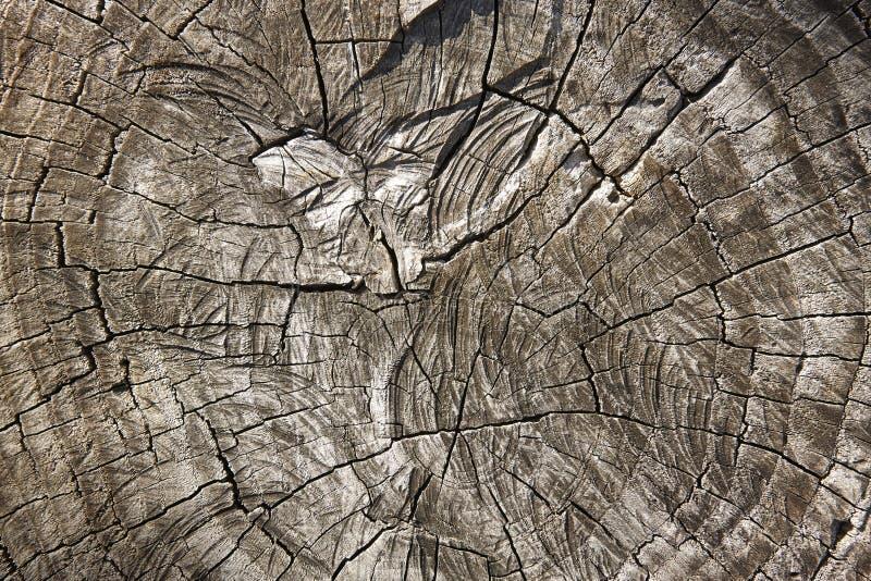 Baum im Sepia Hölzerner strukturierter Hintergrund Holz- und Forstwirtschaft stockfotos