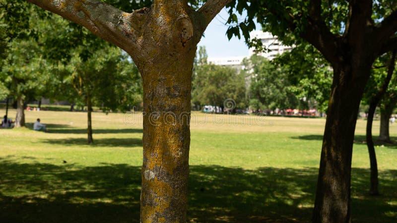 Baum im Sommer, Portugal stockfotografie