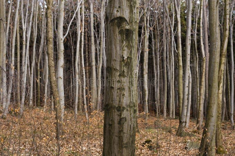 Baum im Wald lizenzfreies stockfoto
