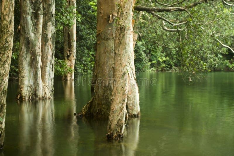 Baum im Wasser stockbilder