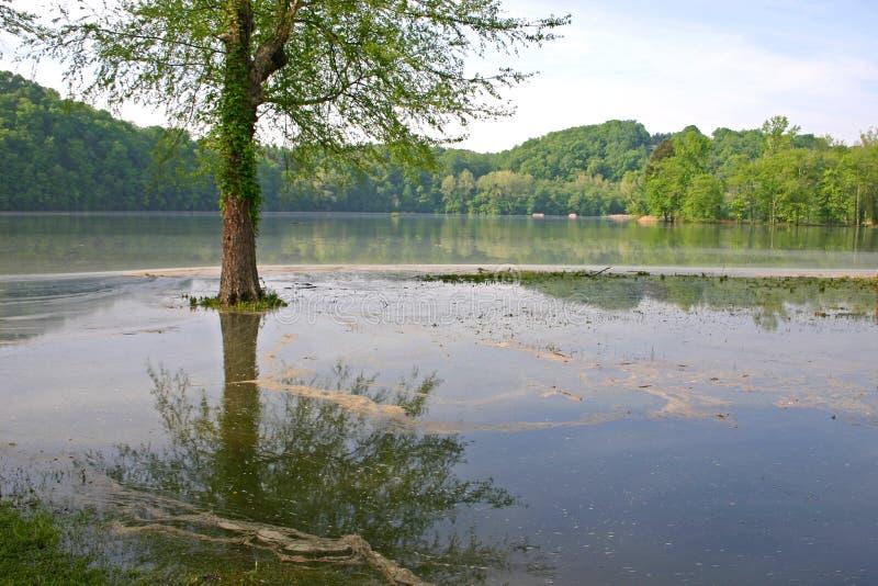 Baum-Insel stockfoto