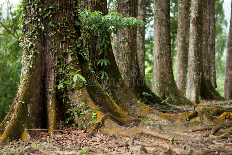 Baum-Kabel stockbild