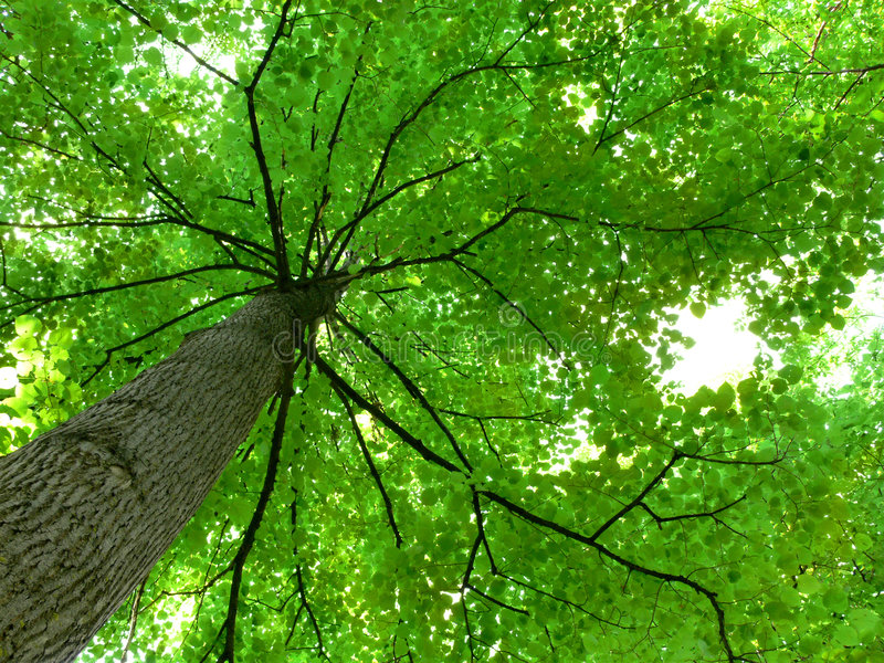 Baum-Kabinendach lizenzfreie stockfotografie