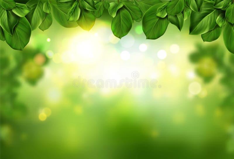 Baum lässt Grenze auf grünem neuem bokeh Hintergrund lizenzfreie stockfotos