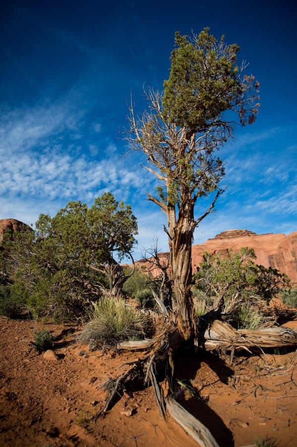 Baum Leben in der Wüste Arizona-/Staat Utah-Linie stockfotos