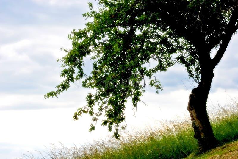 Baum in meinem Traum stockbild