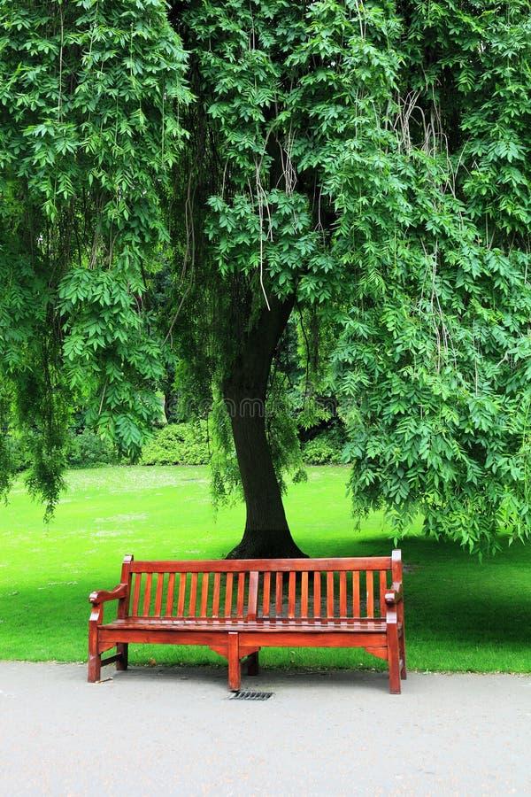 Baum mit Bank stockfotos