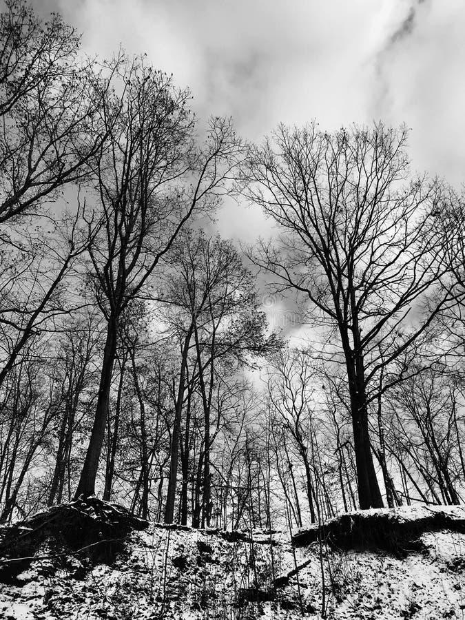 Baum mit Blattblättern stehen stolz über die schneebedeckten Klippen - Noir - schwarz u. weiß stockfotografie