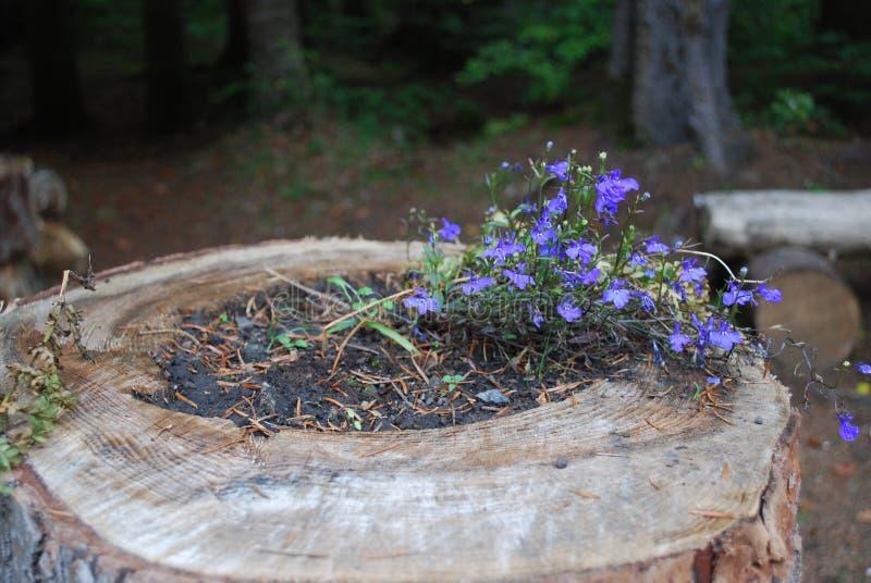 Baum mit Blume stockfotos