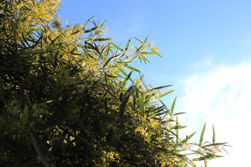 Baum mit dem Himmel lizenzfreie stockfotografie