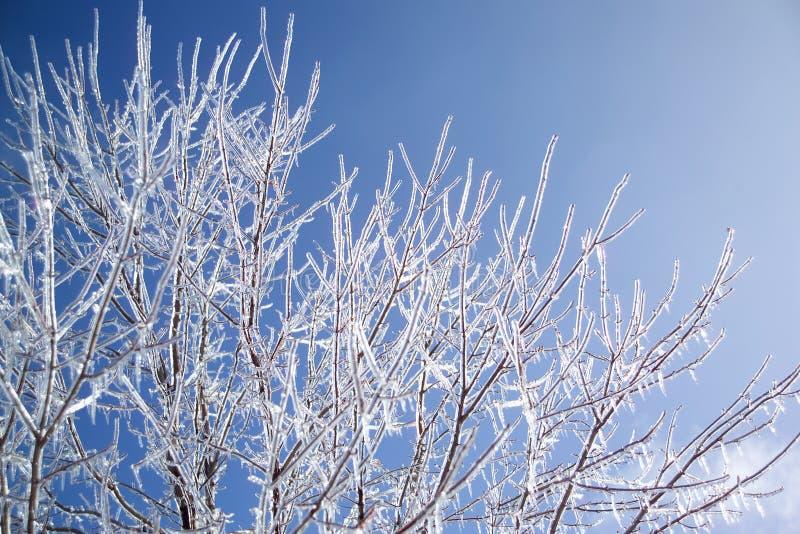 Baum mit Eis stockfotografie