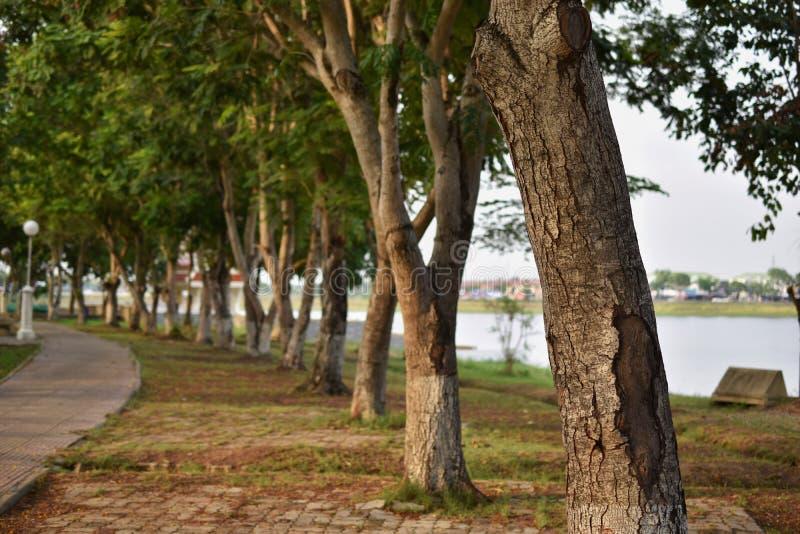 Baum mit Gehweg stockfoto