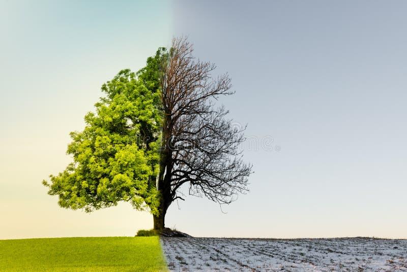 Baum mit Klima- oder Jahreszeitänderung stockfotografie
