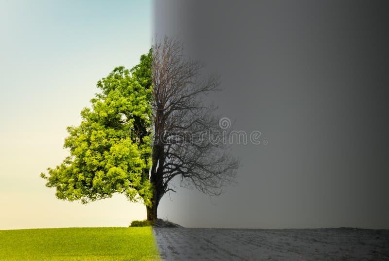 Baum mit Klima- oder Jahreszeitänderung lizenzfreies stockfoto