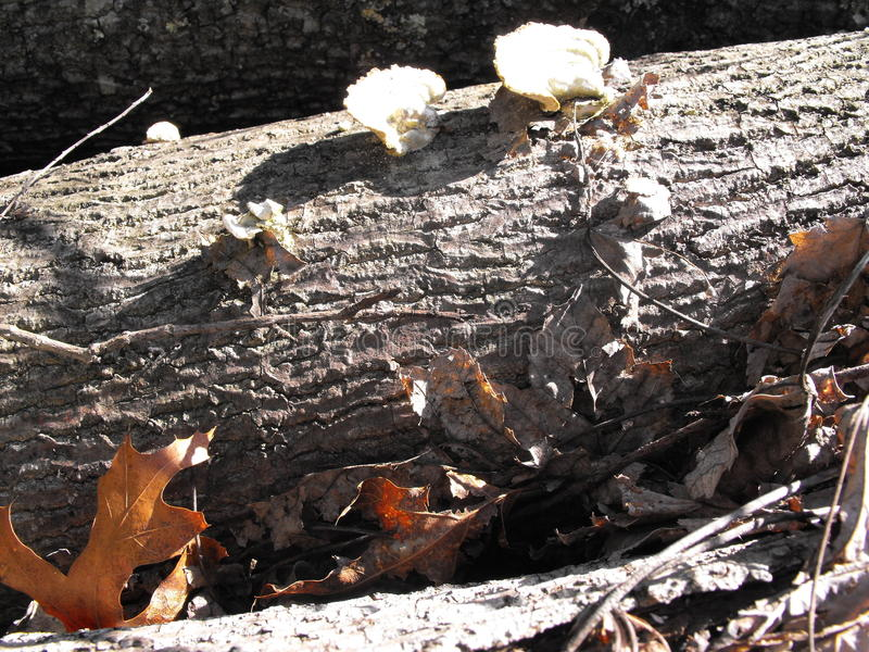 Baum mit Pilzen stockbild